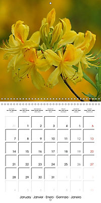 Colourful Rhododendron (Wall Calendar 2019 300 × 300 mm Square) - Produktdetailbild 1
