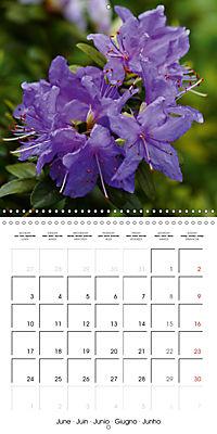 Colourful Rhododendron (Wall Calendar 2019 300 × 300 mm Square) - Produktdetailbild 6