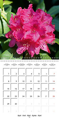 Colourful Rhododendron (Wall Calendar 2019 300 × 300 mm Square) - Produktdetailbild 4