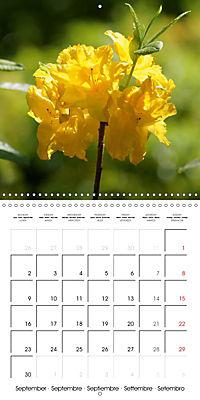 Colourful Rhododendron (Wall Calendar 2019 300 × 300 mm Square) - Produktdetailbild 9