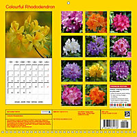 Colourful Rhododendron (Wall Calendar 2019 300 × 300 mm Square) - Produktdetailbild 13
