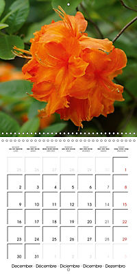 Colourful Rhododendron (Wall Calendar 2019 300 × 300 mm Square) - Produktdetailbild 12