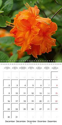 Colourful Rhododendron (Wall Calendar 2019 300 × 300 mm Square) - Produktdetailbild 12