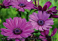 Colours of Nature (Wall Calendar 2019 DIN A4 Landscape) - Produktdetailbild 5