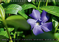 Colours of Nature (Wall Calendar 2019 DIN A4 Landscape) - Produktdetailbild 9