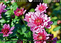 Colours of Nature (Wall Calendar 2019 DIN A4 Landscape) - Produktdetailbild 4