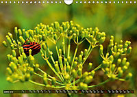 Colours of Nature (Wall Calendar 2019 DIN A4 Landscape) - Produktdetailbild 6
