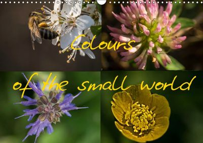 Colours of the small world (Wall Calendar 2019 DIN A3 Landscape), Antun Marakovic