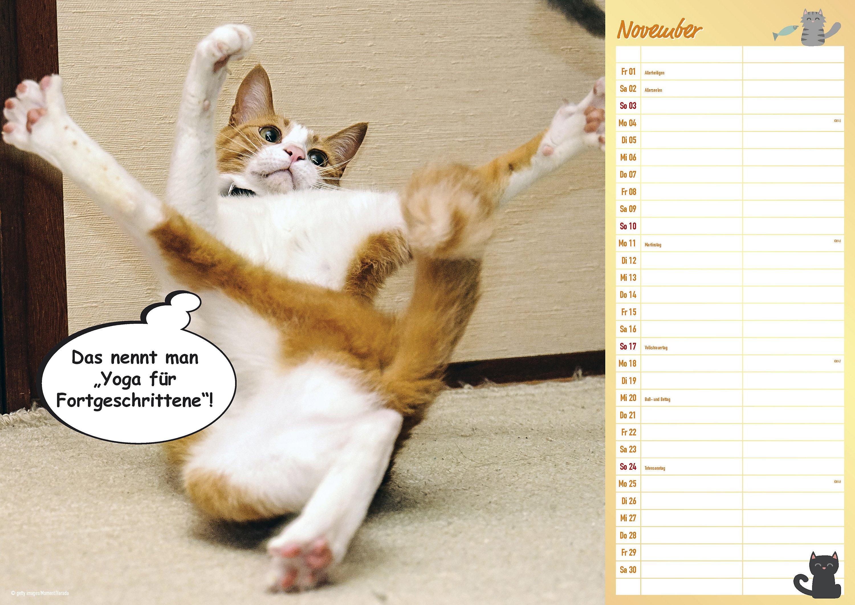 Lustige Sprüche Katzen Katzensprüche Katzengedichte