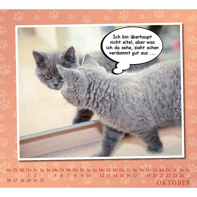 Coole Katzen Coole Sprüche Broschurkalender