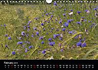 Cornflowers Fascination in Blue (Wall Calendar 2019 DIN A4 Landscape) - Produktdetailbild 2