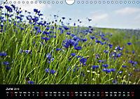 Cornflowers Fascination in Blue (Wall Calendar 2019 DIN A4 Landscape) - Produktdetailbild 6