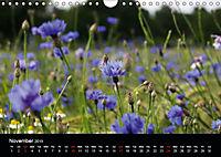 Cornflowers Fascination in Blue (Wall Calendar 2019 DIN A4 Landscape) - Produktdetailbild 11