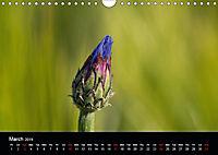 Cornflowers Fascination in Blue (Wall Calendar 2019 DIN A4 Landscape) - Produktdetailbild 3