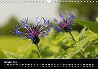 Cornflowers Fascination in Blue (Wall Calendar 2019 DIN A4 Landscape) - Produktdetailbild 1