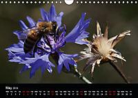 Cornflowers Fascination in Blue (Wall Calendar 2019 DIN A4 Landscape) - Produktdetailbild 5