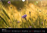 Cornflowers Fascination in Blue (Wall Calendar 2019 DIN A4 Landscape) - Produktdetailbild 4