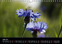 Cornflowers Fascination in Blue (Wall Calendar 2019 DIN A4 Landscape) - Produktdetailbild 7