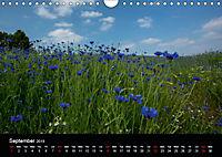 Cornflowers Fascination in Blue (Wall Calendar 2019 DIN A4 Landscape) - Produktdetailbild 9