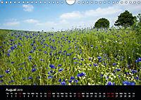 Cornflowers Fascination in Blue (Wall Calendar 2019 DIN A4 Landscape) - Produktdetailbild 8