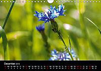 Cornflowers Fascination in Blue (Wall Calendar 2019 DIN A4 Landscape) - Produktdetailbild 12