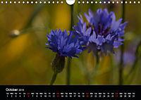 Cornflowers Fascination in Blue (Wall Calendar 2019 DIN A4 Landscape) - Produktdetailbild 10