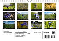 Cornflowers Fascination in Blue (Wall Calendar 2019 DIN A4 Landscape) - Produktdetailbild 13