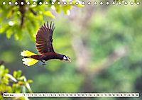Costa Rica - Farben des Regenwaldes (Tischkalender 2019 DIN A5 quer) - Produktdetailbild 4