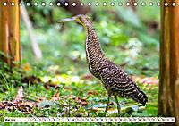 Costa Rica - Farben des Regenwaldes (Tischkalender 2019 DIN A5 quer) - Produktdetailbild 5
