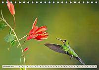 Costa Rica - Farben des Regenwaldes (Tischkalender 2019 DIN A5 quer) - Produktdetailbild 12