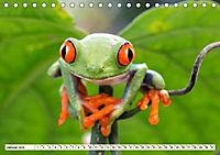 Costa Rica - Farben des Regenwaldes (Tischkalender 2019 DIN A5 quer) - Produktdetailbild 1