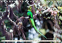 Costa Rica - Farben des Regenwaldes (Tischkalender 2019 DIN A5 quer) - Produktdetailbild 7