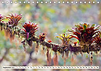 Costa Rica - Farben des Regenwaldes (Tischkalender 2019 DIN A5 quer) - Produktdetailbild 9