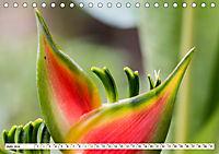 Costa Rica - Farben des Regenwaldes (Tischkalender 2019 DIN A5 quer) - Produktdetailbild 6