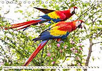 Costa Rica - Farben des Regenwaldes (Tischkalender 2019 DIN A5 quer) - Produktdetailbild 2