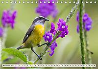 Costa Rica - Farben des Regenwaldes (Tischkalender 2019 DIN A5 quer) - Produktdetailbild 11