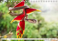Costa Rica - Farben des Regenwaldes (Tischkalender 2019 DIN A5 quer) - Produktdetailbild 10
