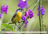 Costa Rica - Farben des Regenwaldes (Wandkalender 2019 DIN A4 quer) - Produktdetailbild 11