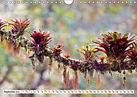 Costa Rica - Farben des Regenwaldes (Wandkalender 2019 DIN A4 quer) - Produktdetailbild 9