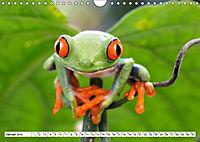 Costa Rica - Farben des Regenwaldes (Wandkalender 2019 DIN A4 quer) - Produktdetailbild 1