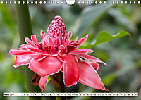 Costa Rica - Farben des Regenwaldes (Wandkalender 2019 DIN A4 quer) - Produktdetailbild 3