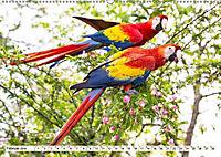 Costa Rica - Farben des Regenwaldes (Wandkalender 2019 DIN A2 quer) - Produktdetailbild 2
