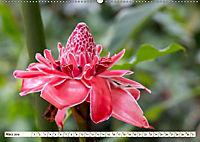 Costa Rica - Farben des Regenwaldes (Wandkalender 2019 DIN A2 quer) - Produktdetailbild 3