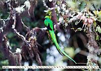 Costa Rica - Farben des Regenwaldes (Wandkalender 2019 DIN A2 quer) - Produktdetailbild 7