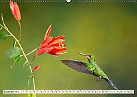 Costa Rica - Farben des Regenwaldes (Wandkalender 2019 DIN A2 quer) - Produktdetailbild 12