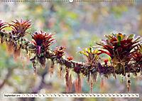 Costa Rica - Farben des Regenwaldes (Wandkalender 2019 DIN A2 quer) - Produktdetailbild 9