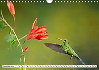 Costa Rica - Farben des Regenwaldes (Wandkalender 2019 DIN A4 quer) - Produktdetailbild 12