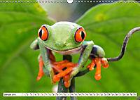 Costa Rica - Farben des Regenwaldes (Wandkalender 2019 DIN A3 quer) - Produktdetailbild 1