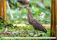 Costa Rica - Farben des Regenwaldes (Wandkalender 2019 DIN A3 quer) - Produktdetailbild 5
