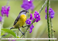Costa Rica - Farben des Regenwaldes (Wandkalender 2019 DIN A3 quer) - Produktdetailbild 11